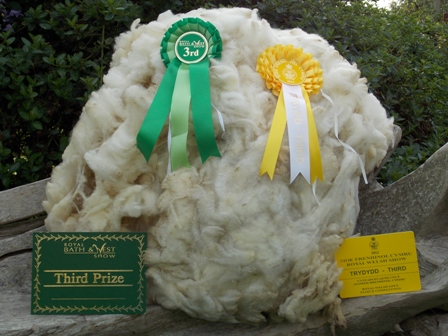 Poll Dorset Fleece